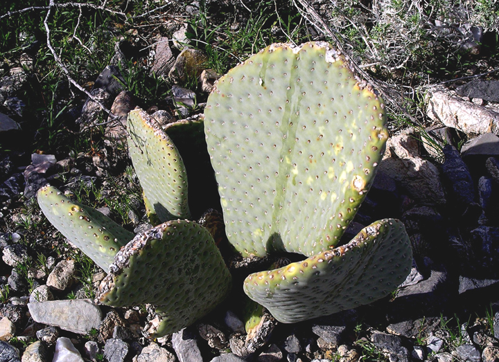 A cactus sits among pebbles and stones.